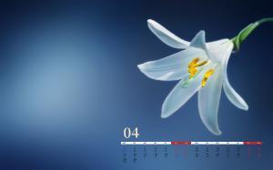 2019年4月鲜花日历壁纸
