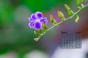 2019年3月春暖花开唯美写真日历桌面壁纸