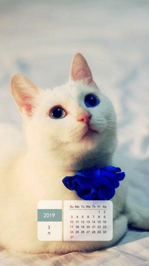 2019年3月萌宠可爱猫咪日历手机壁纸