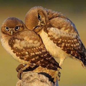 两只小鸟如情人般相偎相依