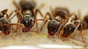 勤劳高清的蚂蚁图片