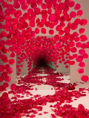 艺术家Sarah Meyohas的镜子隧道