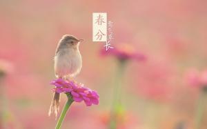 春分莺飞草长