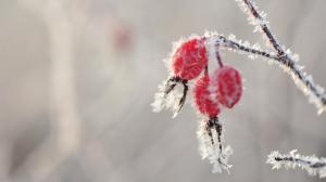二十四节气之霜降季节的红果实唯美高清壁纸