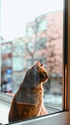 软萌的小猫咪