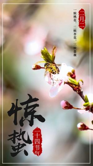 二十四节气惊蛰之蜜蜂采花图片