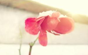 二十四节气之霜降时节唯美植物高清桌面壁纸