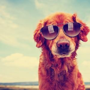 可爱狗狗壁纸图片