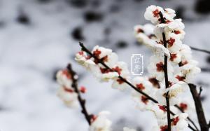 二十四节气之立冬景色图片