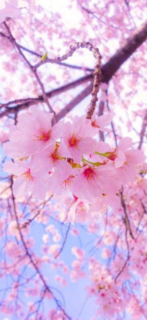 春暖花开,桃花盛开