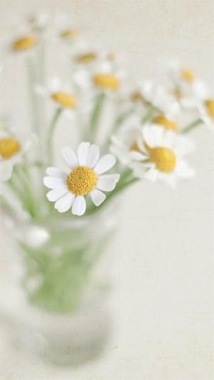 花瓶中的花卉静物摄影图片手机壁纸