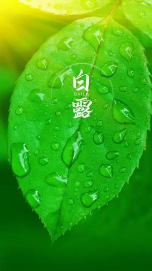 白露时节清新绿叶手机壁纸