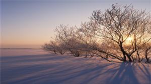 二十四节气之大雪冬天的树木高清电脑桌面壁纸