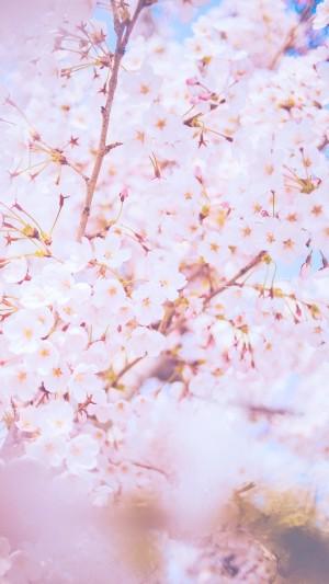 梦幻的日系樱花