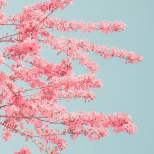 唯美意境植物壁纸图片
