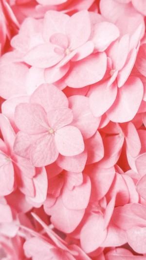 绣球花粉色少女心养眼摄影