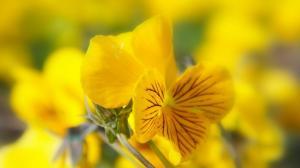 唯美的花卉图片