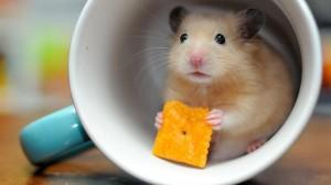 杯子里的呆萌可爱小仓鼠摄影图片