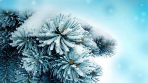 二十四节气之小寒雪景图片