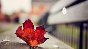 二十四节气之秋分美景高清电脑壁纸