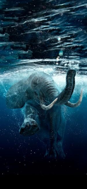 水中的大象
