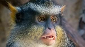 可爱的小猴子摄影图片