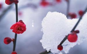 二十四节气之小寒雪景高清电脑壁纸