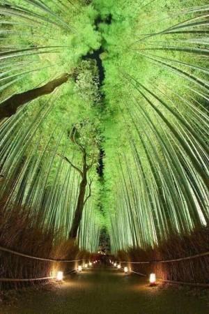 日本京都岚山的天然竹林