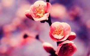 二十四节气之立春植物花朵高清电脑壁纸