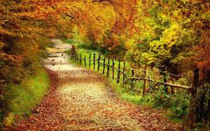 唯美的林中小道图片