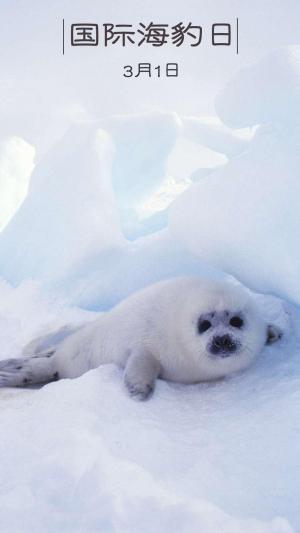 国际海豹日南极冰雪覆盖下的蠢萌小海豹