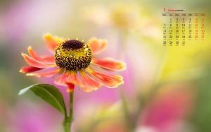 2019年1月小清新植物花卉日历壁纸
