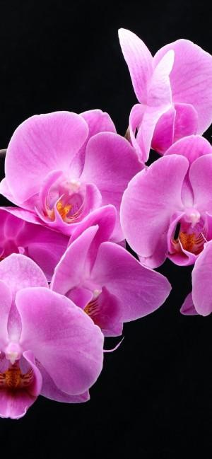 唯美盛开的花朵全面屏手机壁纸