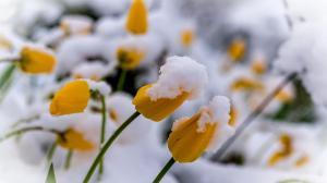 雪中植物养眼唯美高清桌面壁纸
