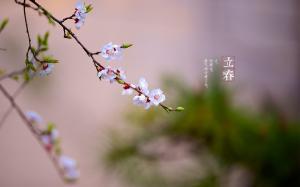 二十四节气之立春高清桌面壁纸