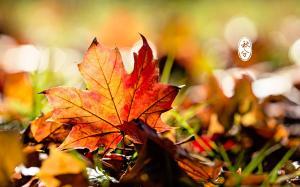 二十四节气之秋分迷人景色高清电脑壁纸