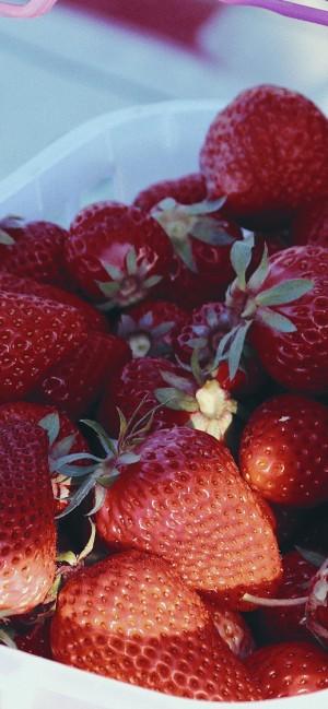 新鲜美味水果草莓手机壁纸