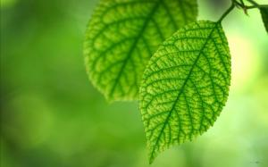 夏天绿色叶子护眼壁纸