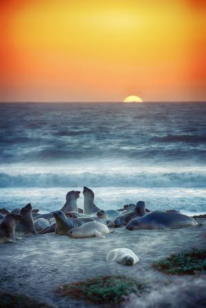 日落下的海象