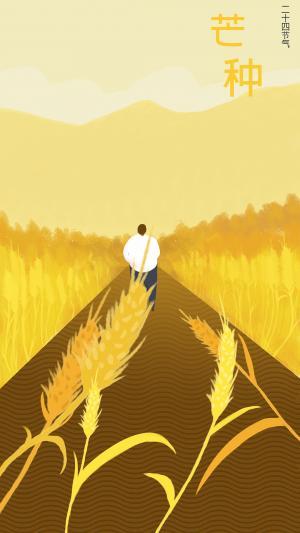 芒种节气金灿灿麦子手绘插画