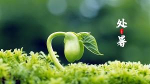 二十四节气处暑清新绿色植物壁纸图片